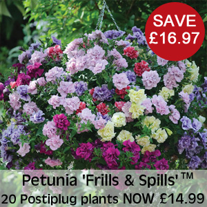 View Petunia 'Frills & Spills'™ Mixed'