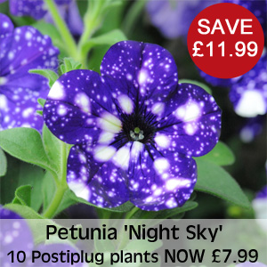 View Petunia 'Night Sky'