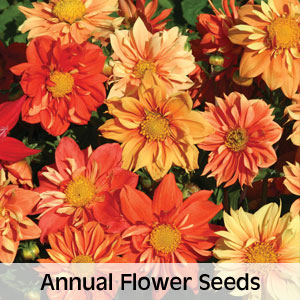 Annual Flower Seeds