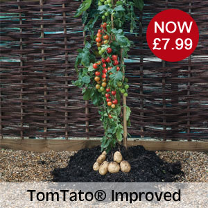 TomTato® Improved now £7.99