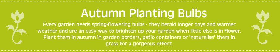 Autumn Planting Bulbs - Every garden needs spring-flowering bulbs - they herald longer days and warmer weather and are an easy way to brighten up your garden when little else is in flower. Plant them in autumn in garden borders, patio containers or 'naturalise' them in grass for a gorgeous effect.