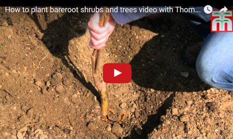 Beginner's Guides to Growing Bare Root Plants and Trees