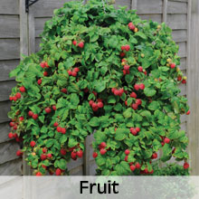 Fruit for your Hanging Baskets