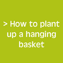 Your Guide for Success with your Hanging Baskets