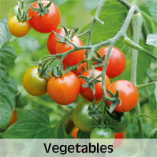 Vegetables to grow in Hanging Baskets