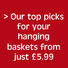 Our top pick hanging basket plants