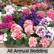 All Annual Bedding Plant Varieties