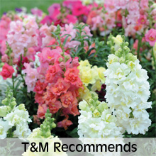 Thompson & Morgan's Recommended Bedding Plants