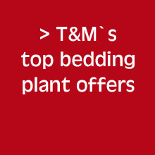 Bedding Plant Offers