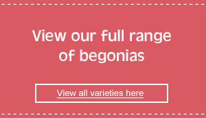 view our full range of begonias