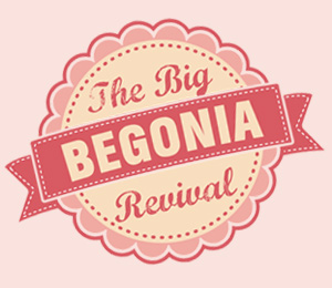 big begonia revival