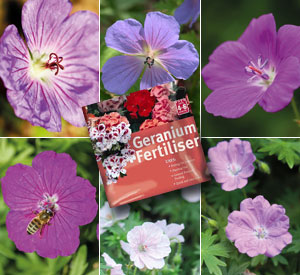 Hardy Geranium Collection - 6 varieties plus fertiliser just £14.99 - worth £29.99