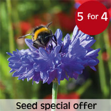 Special Offer - 5 packets for the price of 4 on all seeds