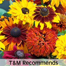 Thompson & Morgan Recommends Classic Cottage Garden Varieties