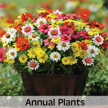 All Annual Plant Varieties