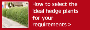 Selecting the ideal hedge plants
