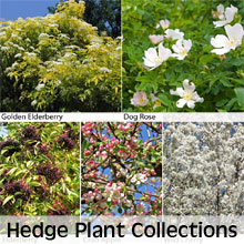 Grow a mixed hedgerow from one of our hedging plant collections