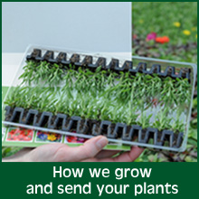 How we grow and send your plants