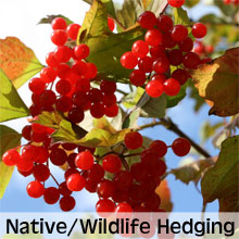 Native and Wildlife Friendly Hedging Plants