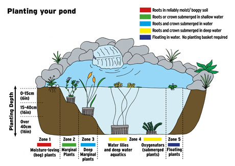 Our planting guide for water plants