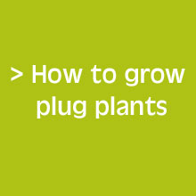 Handy Tips - How To Grow Plug Plants