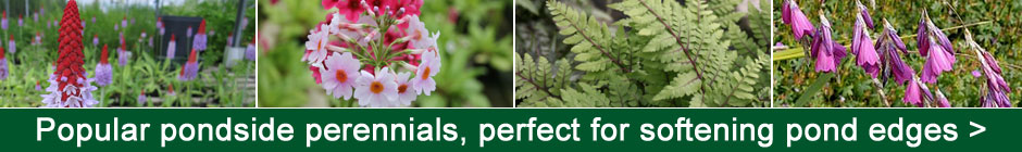 Popular pondside perennials - perfect for softening pond edges