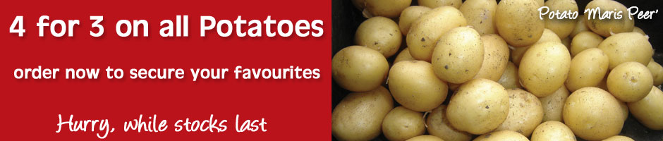 Special Offer - all potatoes 4 packs for the price of 3 while stocks last
