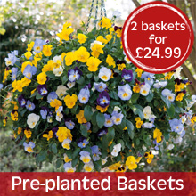 Pre-planted Baskets