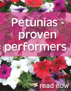 Petunias - proven performers