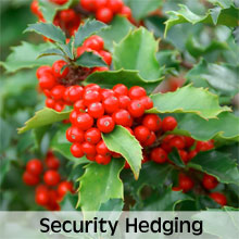 Varieties for Growing Security Hedges