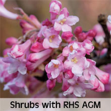 Shrubs with an RHS Award of Garden Merit