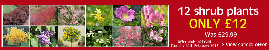 Bumper Shrub Collection Offer