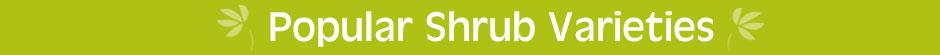 Popular Shrub Varieties