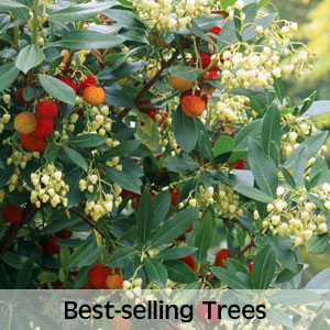 Best-selling Trees