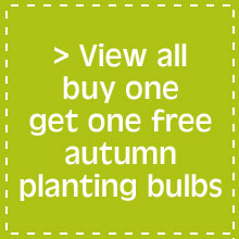 View all buy one get one free autumn planting bulbs