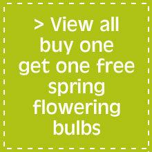 View all buy one get one free spring flowering bulbs