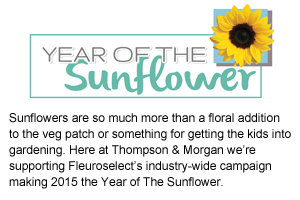 year of the sunflower