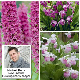 New this season - Hardy Orchid Collection - Recommended by Michael Perry, New Product Development Manager