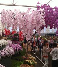 A spectacular orchid tree