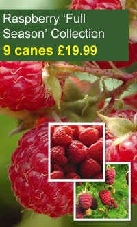 Fruit Special Offers from Thompson & Morgan