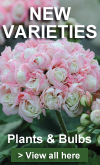 Offer of the week - Brand new varieties