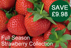 Strawberry 'Full Season Collection'