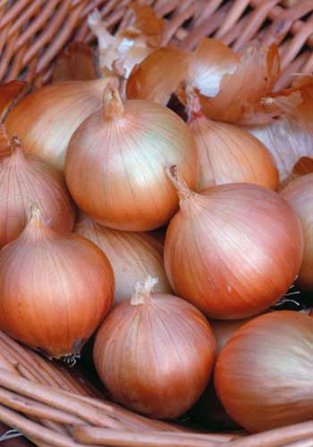Onion Hi-Keeper - Sow this now