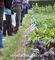 Vegetable Trials