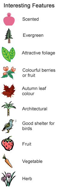 Plants for wildlife - Interesting Features - Scented, evergreen, attractive foliage, colourful berries and fruit, good shelter for birds, fruit, herb, vegetable, autumn leaf colour