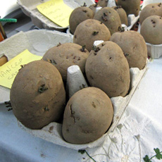 Use up old egg boxes for chitting your potatoes
