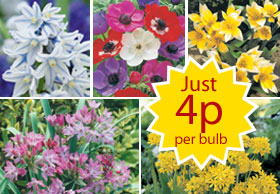 autumn bedding plants from just 5p each