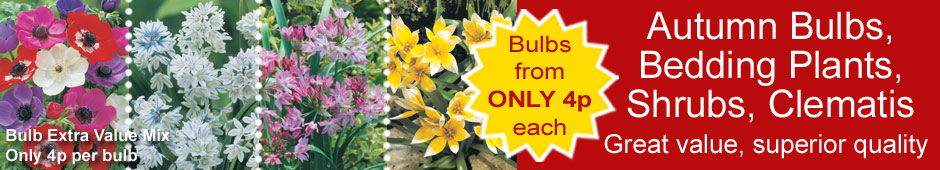 Bulbs, bedding plants, shrubs, clematis