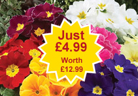 autumn bedding plants from just 6p each