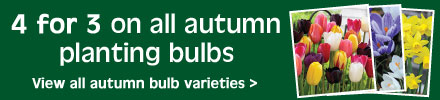 4 for 3 on autumn planting bulbs